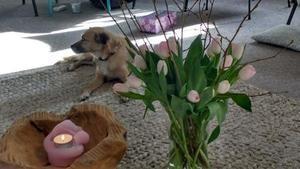 laraenbloemen